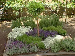 Image of a knot garden style herb garden with central bay tree and other herbs planted in a diamond shaped design.