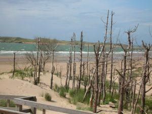 Image of a coastal beach scene