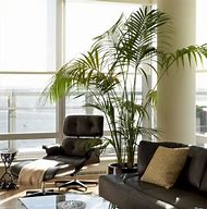 Image of a lounge with a large palm in a pot