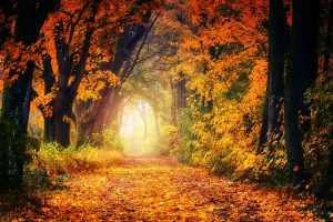 Image of an Autumn landscape showing a path through trees in Autumn colours