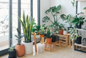 Image of a corner of a lounge with lots of plants