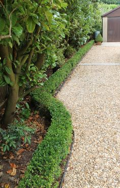 Image of the edge of a gravel driveway with neat box edging and border with trees and shrubs