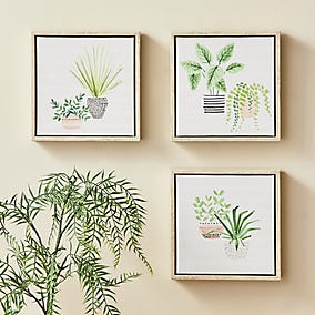 Image of three botanical prints mounted on a wall with a potted plant to one side