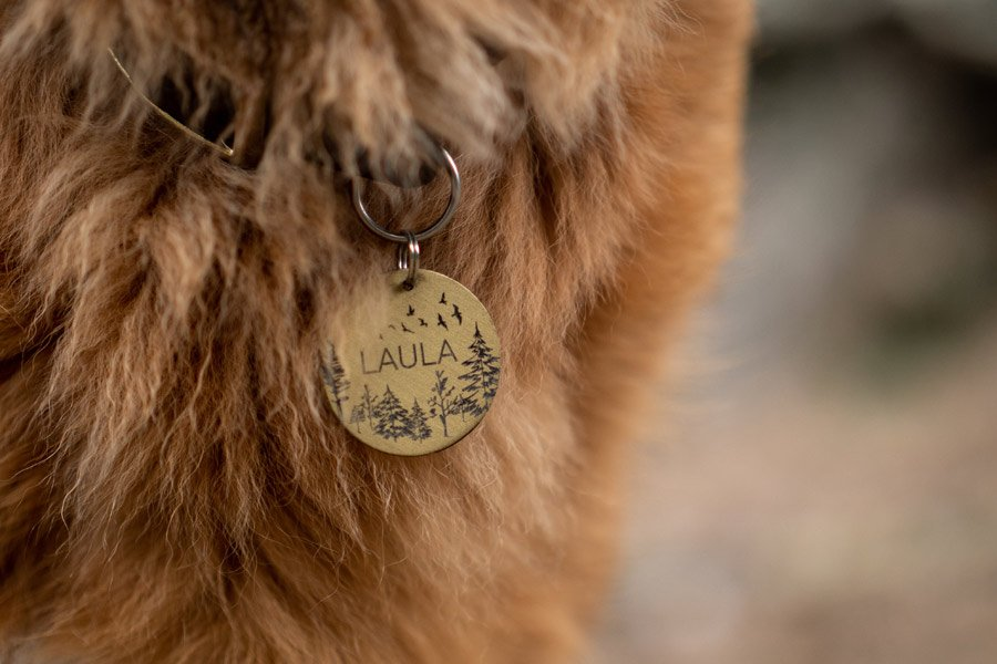 Close up image of a dog's neck showing its collar and name tag